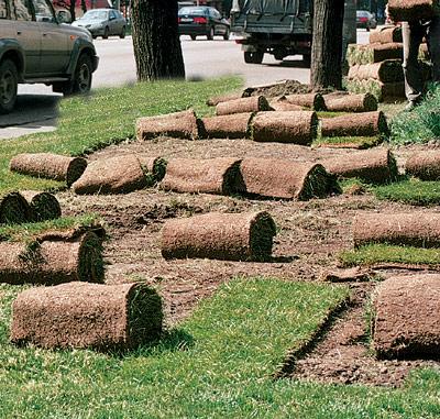 Царство травы