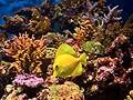Окно в подводный  мир