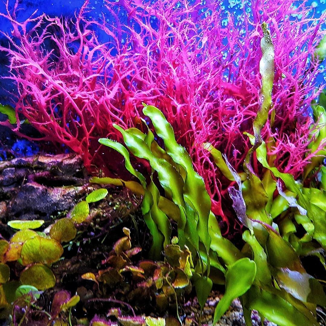 красивые искусственные водоросли аквариума фото комфортная поза таком