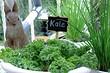 Как сделать мини-огород на балконе: 15 ярких примеров