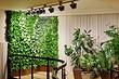 Как сделать вертикальное озеленение своими руками: 7 рекомендаций