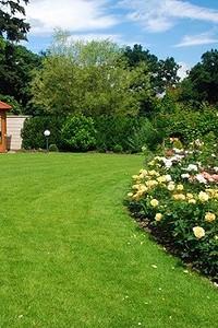 Как сделать зеленый газон на даче: простой путь к изумрудной лужайке