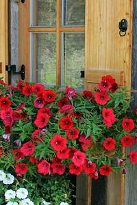 Какие цветы посадить, чтобы цвели все лето: 15 лучших вариантов