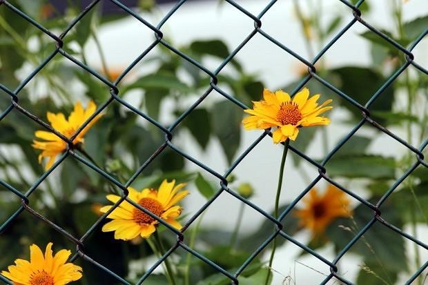Сетчатый забор своими руками