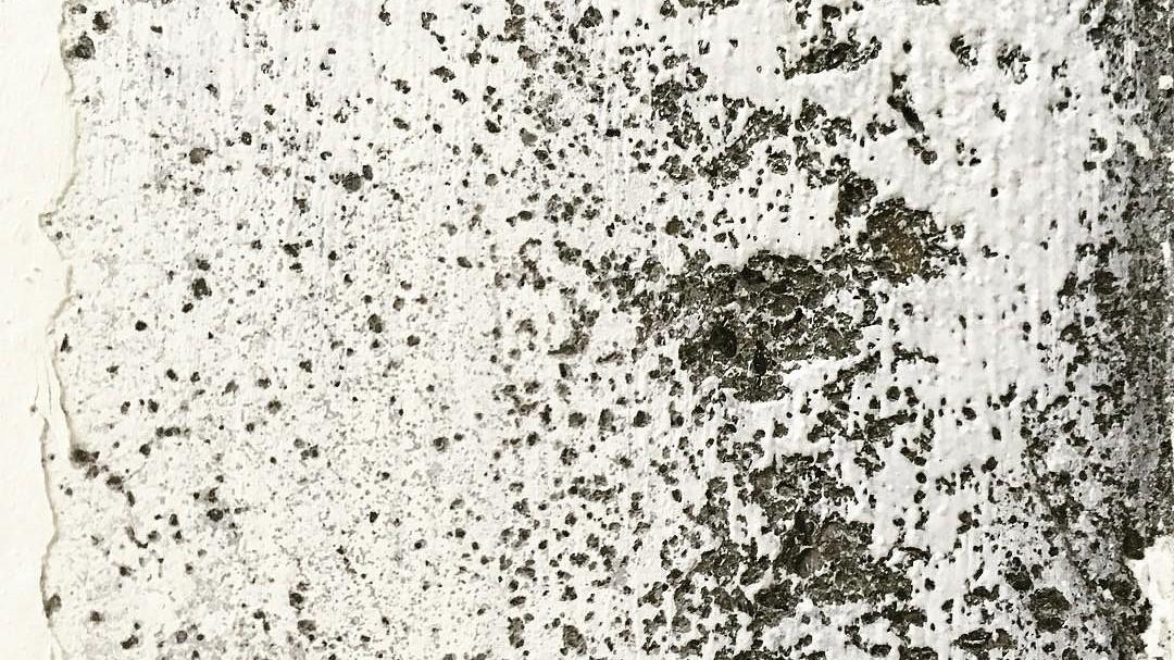 Грибок на стенах кухни