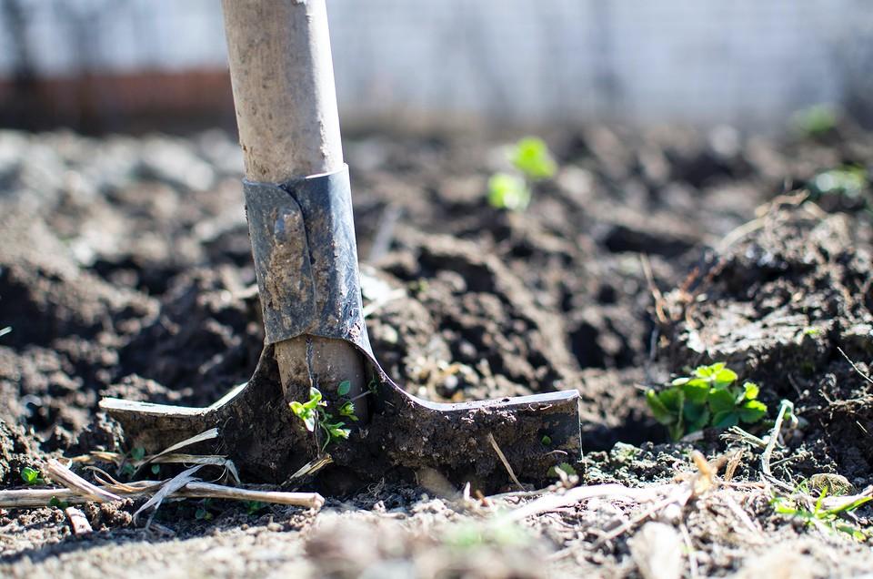 Когда лучше сажать и пересаживать деревья (хвойные и плодовые)