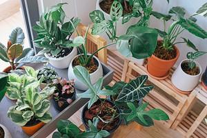 Тест: Как хорошо вы разбираетесь в комнатных растениях?