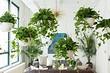 7 вьющихся растений, которые вы можете легко вырастить в квартире