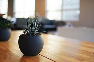 Как завести свое первое комнатное растение: 4 совета для начинающих