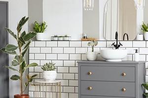 6 растений, которые вы можете поставить даже…в ванной комнате (и им ничего не будет!)