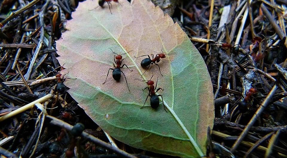 Борьба с муравьями на садовом участке: как избавиться от вредителей в саду и огороде
