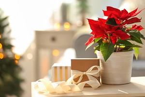 5 растений, которыми можно украсить дом к Новому году (кроме елки)