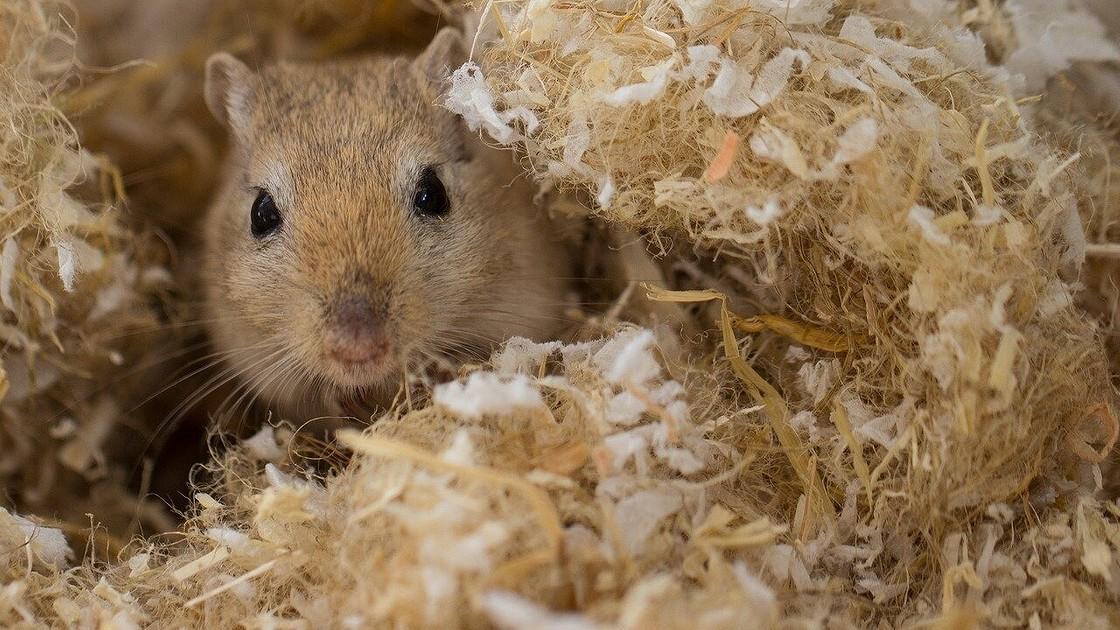 Как вывести грызунов и избавиться от мышей в квартире: эффективные народные методы, отпугиватели и ловушки, помощь профессионалов
