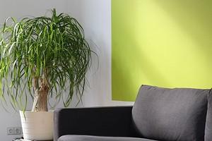 Как мыть окрашенные стены: полезные советы для разных видов краски