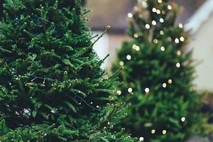 8 вещей, которые вы не должны делать с живой новогодней елкой