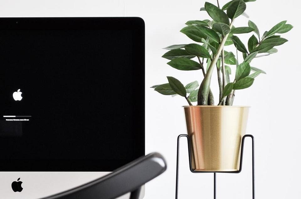 12 полезных аксессуаров для комнатных растений