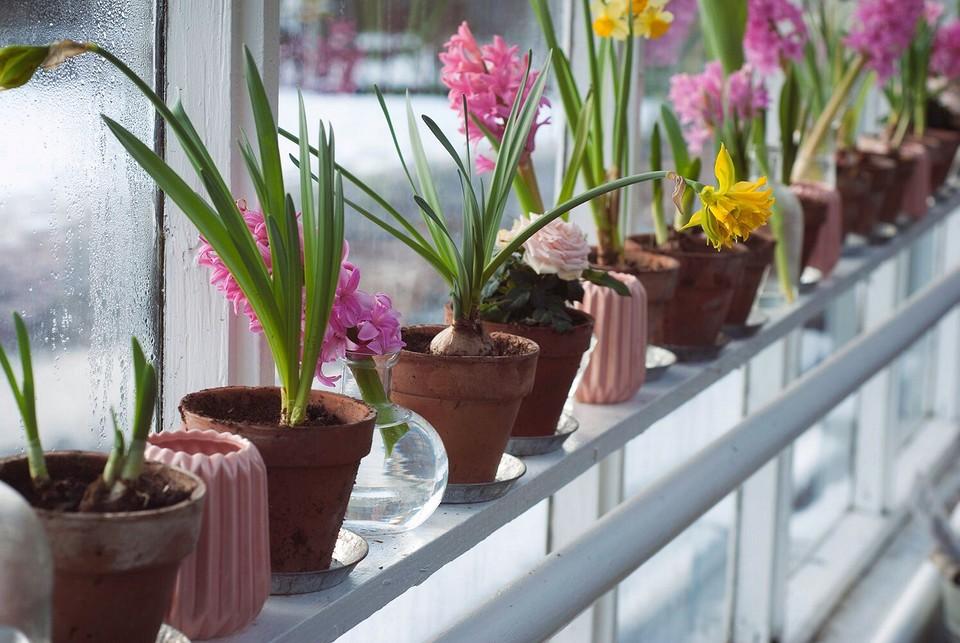11 дел на дачном участке, которые необходимо выполнить весной