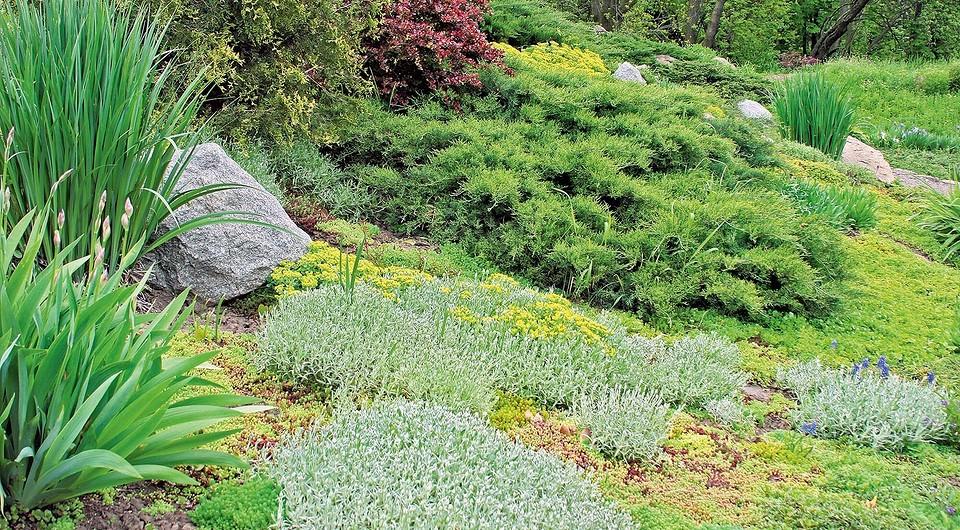Нетравяной газон можно выраст&#...