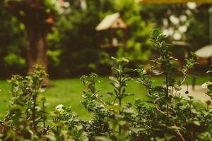 Борьба с кротами на садовом участке: 5 способов