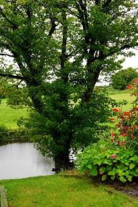 7 дельных советов по выбору растений для посадки на даче