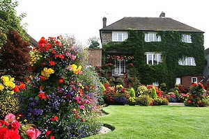 10 красивых цветов, которые расцветут в вашем саду даже без ухода