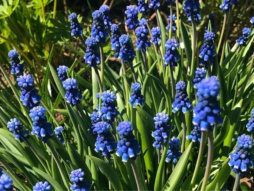 Как облегчить уход за садом: 9 простых идей