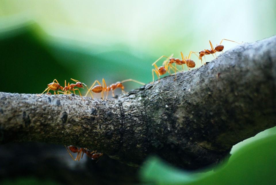Как избавиться от муравьев на даче покупными и народными средствами