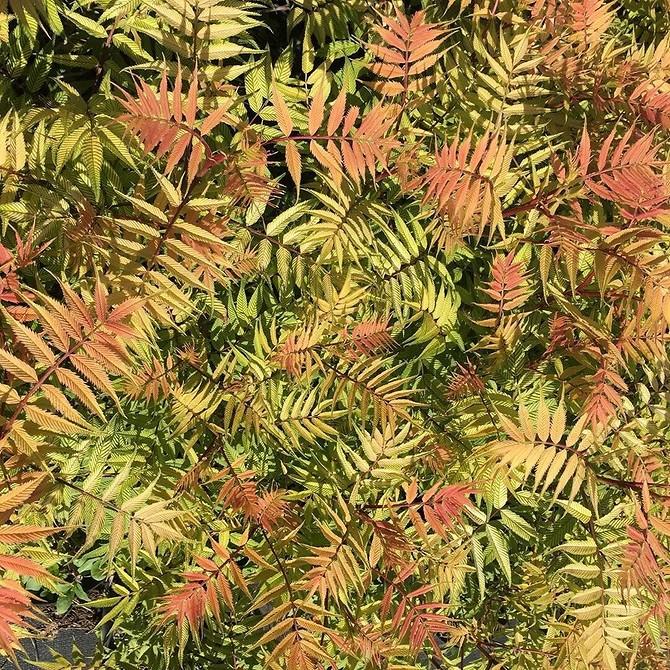 9 дачных растений, которые сделают ваши 5 соток визуально больше