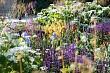 Необычные цветы для вашего сада: 7 сортов, которые вы не увидите у соседей