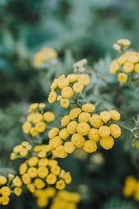 Как вырастить желтый цветущий кустарник на даче без усилий