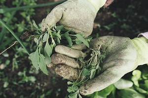 Как избавиться от сорняков на участке, садовых дорожках и грядках: 13 способов