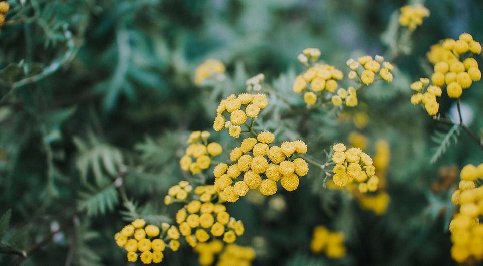 Цветок Зефирантес - уход в домашних условиях | Цветы, Комнатные ... | 530x960