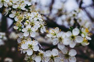 10 лучших дачных кустарников, цветущих белыми цветами