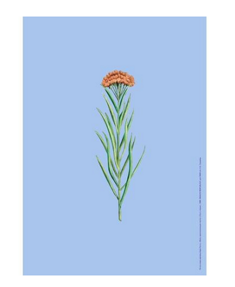 Плакат «Цветок»