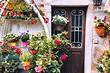 7 самых красивых вьющихся цветов для сада