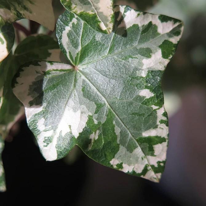 Вьющиеся цветы для дачи и сада: лучшие сорта растений