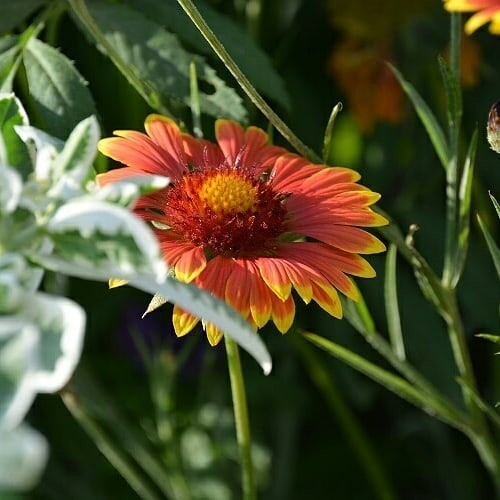 10 цветов, которые вырастут даже там, где ничего не растет