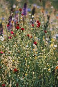 Выбираем самые неприхотливые цветы для дачи: 23 подходящих вида