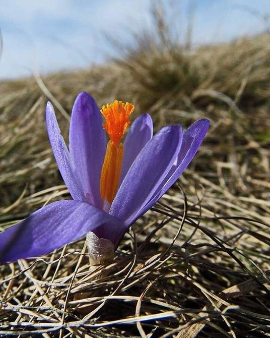 Неприхотливые цветы для дачи: список самых красивых многолетних и однолетних растений