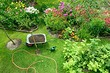 Тест: Какие растения вам посадить на даче?