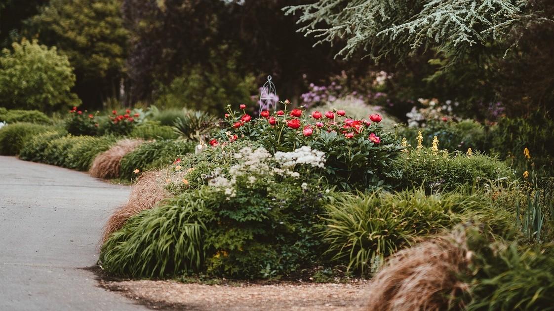 Кустарник с голубыми цветами название