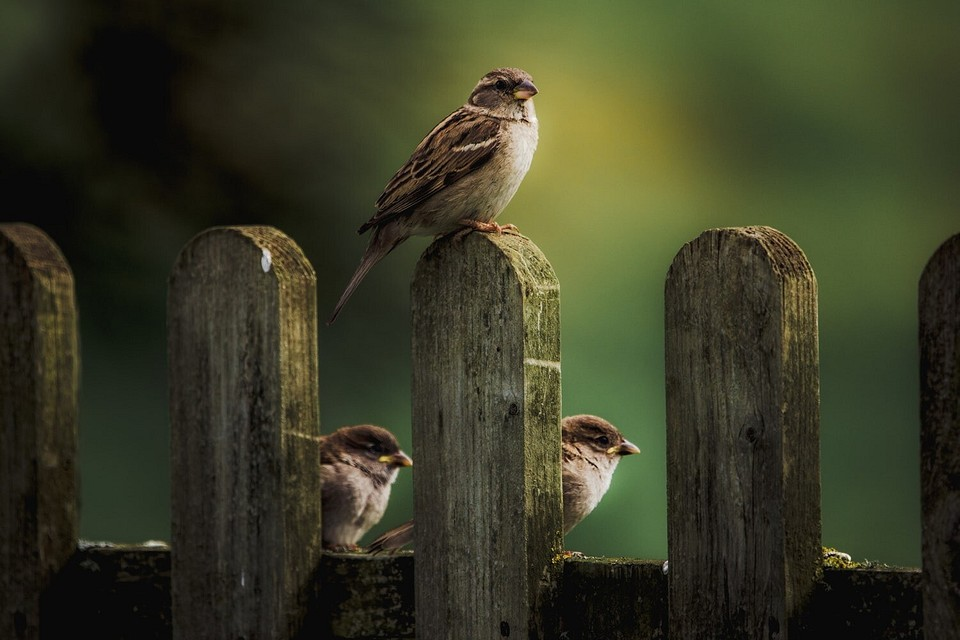 Как отпугнуть птиц с участка: 9 лучших способов