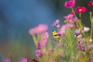 Каких полезных птиц приманить на ваш участок и как это сделать: 6 идей