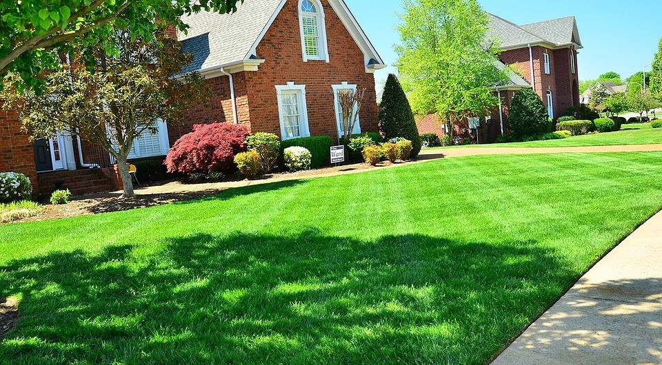 Уход за газоном: как правильно ухаживать весной и летом