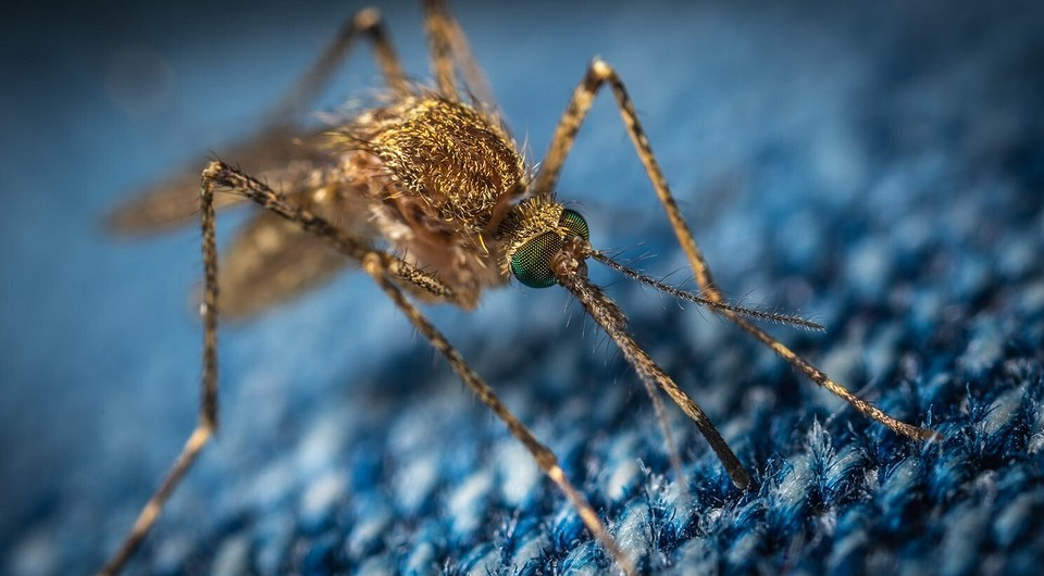 Комары: 7 природных средств избавления