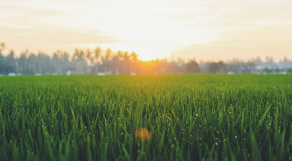 Что такое жидкий газон: вся правда от ivd.ru