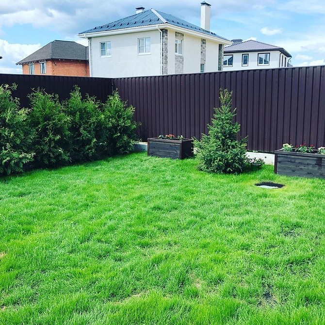 Как подсеять газон в проплешины: досеиваем траву правильно