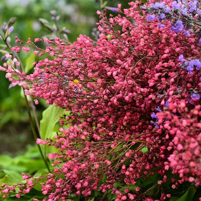 8 полезных растений для дачи, которые вы сможете использовать на кухне и в домашней аптечке