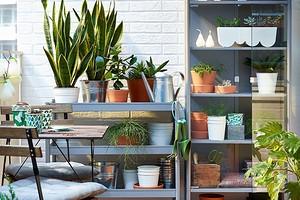 6 идеальных растений для оформления балкона