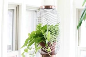7 простых и классных дизайн-хаков от ИКЕА для комнатных растений